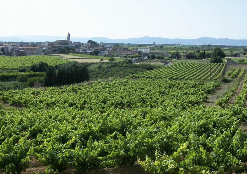 Tarragona (DO) DO Tarragona Catalunya Wine
